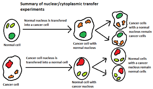nuclearcytoplasmictransfer 1